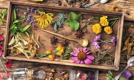 La naturopathie pour l'équilibre