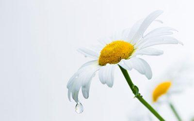 migraine plantes