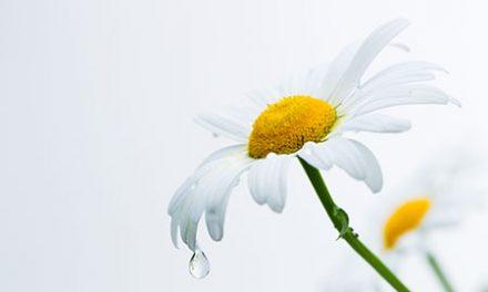 Comment traiter une migraine avec les plantes ?