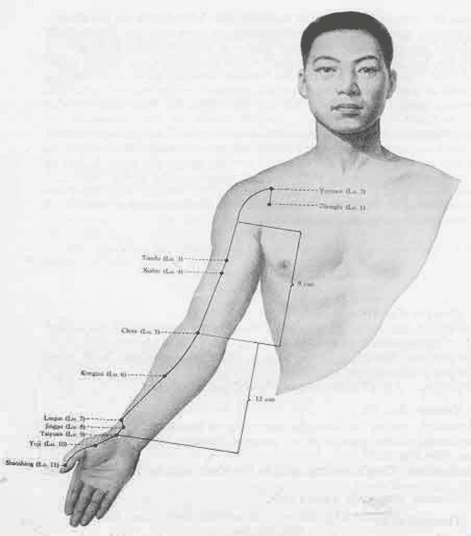 Les méridiens de l'Automne : le Poumon et le Gros Intestin.